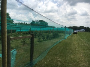blueberry netting